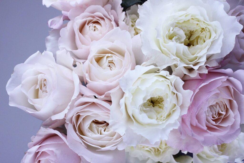 美しい花  beautiful flowers